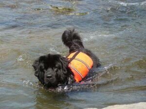 dog with life vest