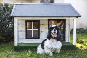 dog boarding facilities