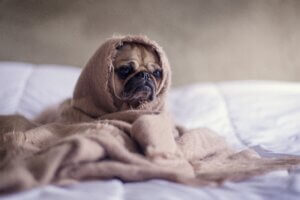 common dog allergies